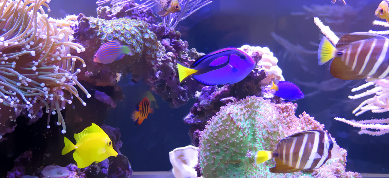 Eagle Ridge Dental - Aquarium